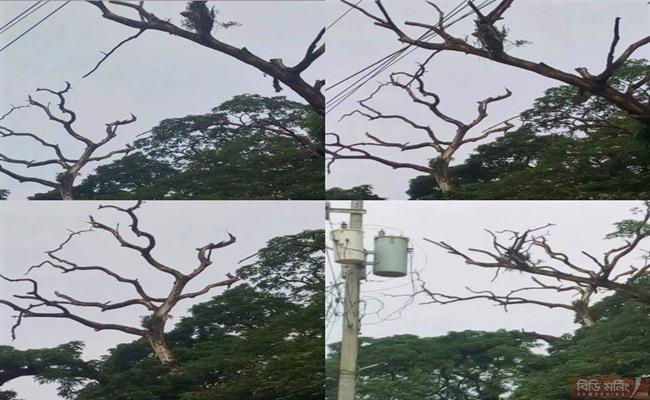 বেনাপোলে শতবর্ষী গাছের পচন, ডাল ভেঙে পড়ে বাড়ছে দুর্ঘটনা